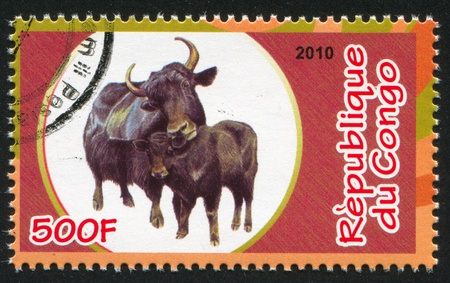 CONGO - CIRCA 2010: stamp printed by Congo, shows African buffalo, circa 2010