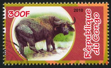 bovid: CONGO - CIRCA 2010: stamp printed by Congo, shows African buffalo, circa 2010 Editorial
