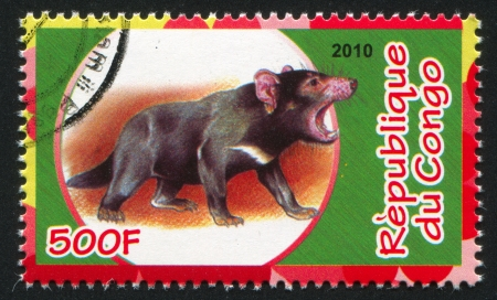 CONGO - CIRCA 2010: stamp printed by Congo, shows Tasmanian devil, circa 2010