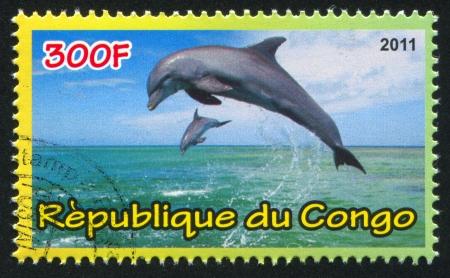 CONGO - CIRCA 2011: stamp printed by Congo, shows Dolphins, circa 2011 Stock Photo - 21333164
