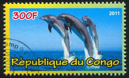 CONGO - CIRCA 2011: stamp printed by Congo, shows Dolphins, circa 2011 Stock Photo - 21333385