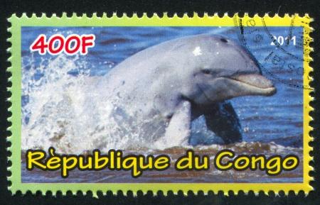 CONGO - CIRCA 2011: stamp printed by Congo, shows Dolphins, circa 2011 Stock Photo - 21333384