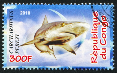 CONGO - CIRCA 2010: stamp printed by Congo, shows Caribbean reef shark, circa 2010