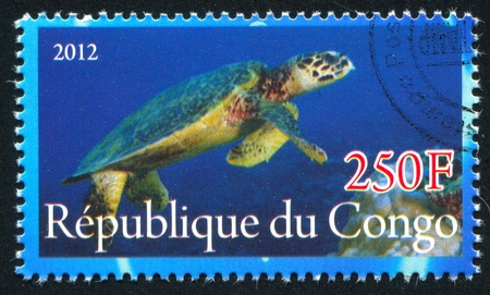 CONGO - CIRCA 2012: stamp printed by Congo, shows Turtle, circa 2012
