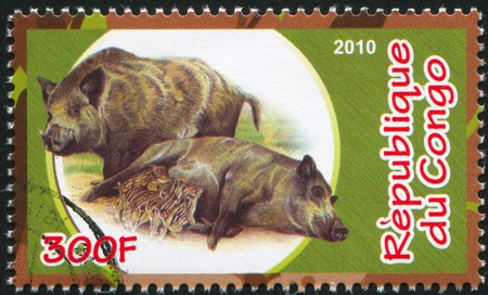 CONGO - CIRCA 2010: stamp printed by Congo, shows Wild boar, circa 2010