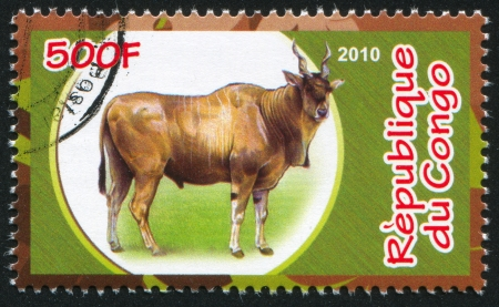CONGO - CIRCA 2010: stamp printed by Congo, shows Common eland, circa 2010