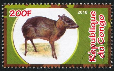bovid: CONGO - CIRCA 2010: stamp printed by Congo, shows Royal antelope, circa 2010