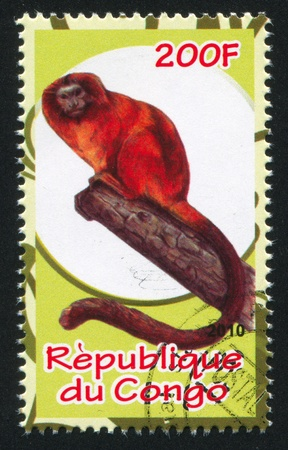 CONGO - CIRCA 2010: stamp printed by Congo, shows monkey, circa 2010
