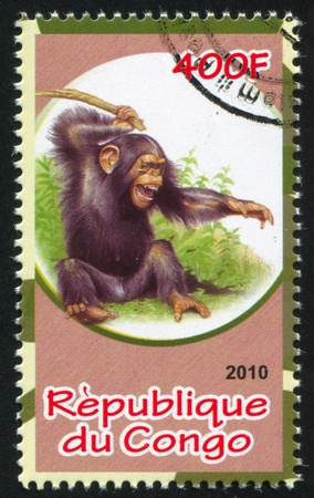 CONGO - CIRCA 2010: stamp printed by Congo, shows Chimpanzee, circa 2010