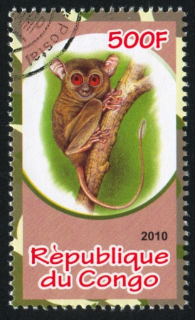 CONGO - CIRCA 2010: stamp printed by Congo, shows Tarsier, circa 2010