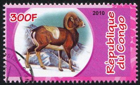 bovid: CONGO - CIRCA 2010: stamp printed by Congo, shows Mouflon, circa 2010