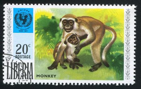 unicef: LIBERIA - CIRCA 1971: timbro stampato dalla Liberia, mostra UNICEF emblema e la scimmia, circa 1971