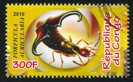 forewing: CONGO - CIRCA 2010: stamp printed by Congo, shows common earwig, circa 2010 Editorial