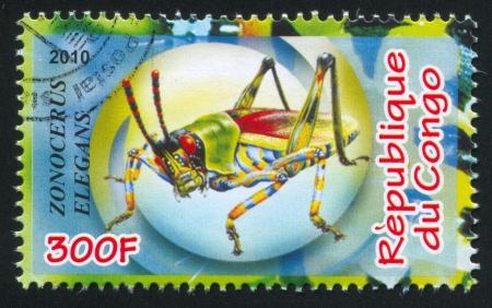 hindwing: CONGO - CIRCA 2010: stamp printed by Congo, shows Elegant Grasshopper, circa 2010