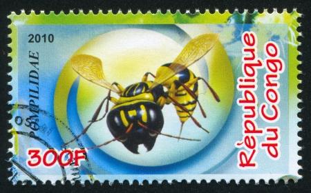 apocrita: CONGO - CIRCA 2010: stamp printed by Congo, shows Spider wasp, circa 2010