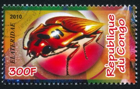 CONGO - CIRCA 2010: stamp printed by Congo, shows Click beetle, circa 2010