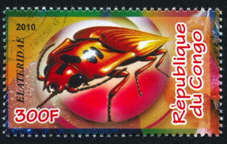 elateridae: CONGO - CIRCA 2010: stamp printed by Congo, shows Click beetle, circa 2010