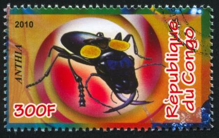anthia: CONGO - CIRCA 2010: stamp printed by Congo, shows ground beetle, circa 2010