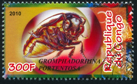 madagascar hissing cockroach: CONGO - CIRCA 2010: stamp printed by Congo, shows Madagascar hissing cockroach, circa 2010 Editorial