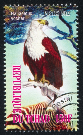 CHAD - CIRCA 2012: stamp printed by Chad, shows African fish eagle, circa 2012