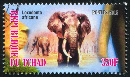 CHAD - CIRCA 2012: stamp printed by Chad, shows African bush elephant, circa 2012
