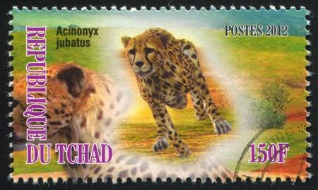 CHAD - CIRCA 2012: stamp printed by Chad, shows Cheetah, circa 2012 Stock Photo - 21840900