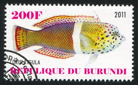 BURUNDI - CIRCA 2011: stamp printed by Burundi, shows Tsirrilabrus, circa 2011 Stock Photo - 21840914