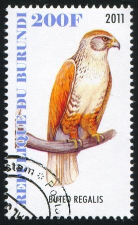 ferruginous: BURUNDI - CIRCA 2011: stamp printed by Burundi, shows Ferruginous hawk, circa 2011