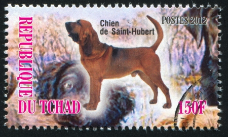 bloodhound: CHAD - CIRCA 2012: stamp printed by Chad, shows Bloodhound, circa 2012