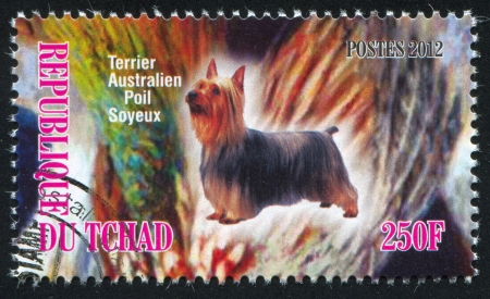 silky terrier: CIAD - CIRCA 2012: timbro stampato da Chad, mostra Australian Terrier Silky, circa 2012
