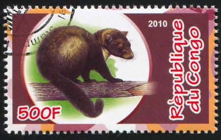 CONGO - CIRCA 2010: stamp printed by Congo, shows Marten, circa 2010
