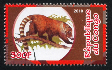 CONGO - CIRCA 2010: stamp printed by Congo, shows Coati, circa 2010 Editorial