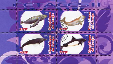 echolocation: CONGO - CIRCA 2010: stamp printed by Congo, shows Dolphin, circa 2010 Editorial