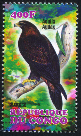 wedgetailed: CONGO - CIRCA 2012: stamp printed by Congo, shows Wedge-tailed Eagle, circa 2012
