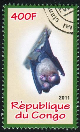 echolocation: CONGO - CIRCA 2011: stamp printed by Congo, shows Bat, circa 2011 Editorial