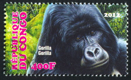 CONGO - CIRCA 2012: stamp printed by Congo, shows Mountain gorilla, circa 2012