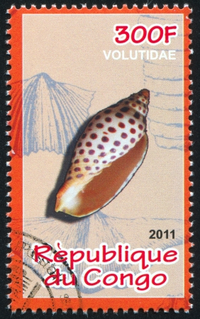 calcification: CONGO - CIRCA 2011: stamp printed by Congo, shows Sea shell, circa 2011