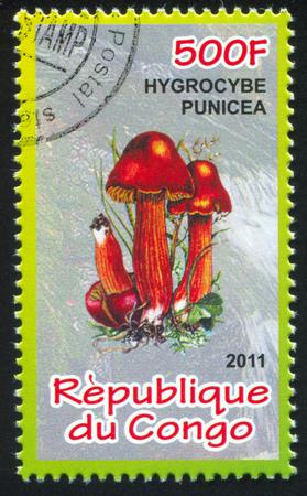 frondage: CONGO - CIRCA 2011: stamp printed by Congo, shows Hygrocybe, circa 2011 Editorial