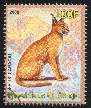 CONGO - CIRCA 2008: stamp printed by Congo, shows Caracal, circa 2008
