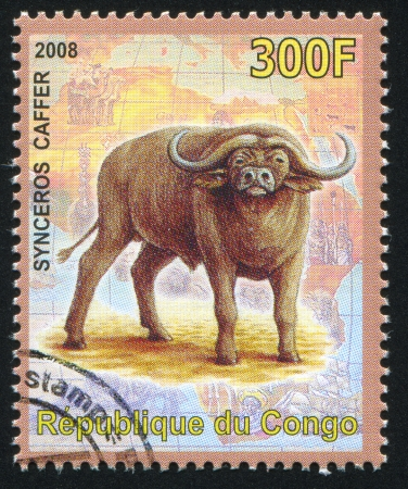 CONGO - CIRCA 2008: stamp printed by Congo, shows African buffalo, circa 2008