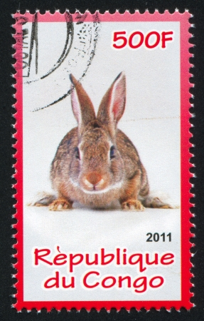 CONGO - CIRCA 2011: stamp printed by Congo, shows Rabbit, circa 2011