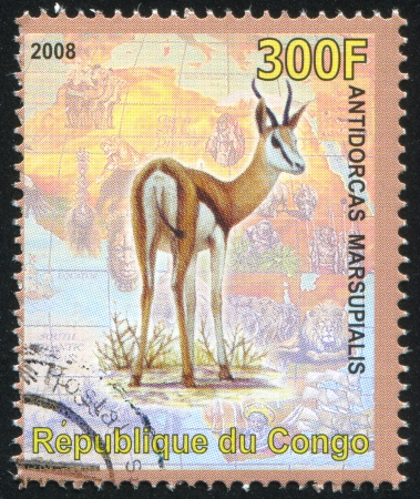 CONGO - CIRCA 2008: stamp printed by Congo, shows Springbok, circa 2008