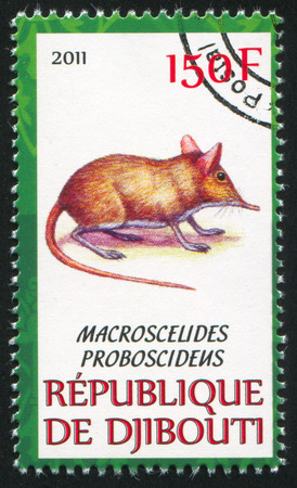 DJIBOUTI - CIRCA 2011: stamp printed by Djibouti, shows Short-eared elephant shrew, circa 2011