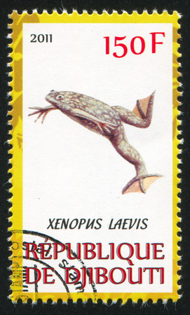 clawed: DJIBOUTI - CIRCA 2011: stamp printed by Djibouti, shows African clawed frog, circa 2011