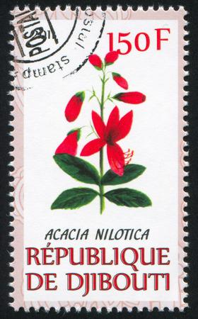 nilotica: DJIBOUTI - CIRCA 2011: stamp printed by Djibouti, shows Acacia nilotica, circa 2011 Editorial