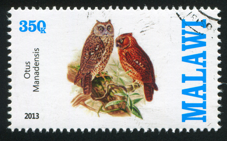 strigiformes: MALAWI - CIRCA 2013: stamp printed by Malawi, shows Pallid Scops Owl, circa 2013 Editorial