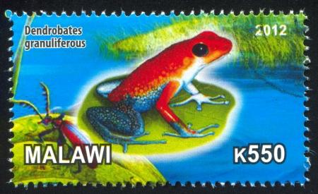 interdigital: MALAWI - CIRCA 2012: stamp printed by Malawi, shows Frog, circa 2012