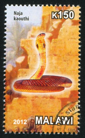 MALAWI - CIRCA 2012: stamp printed by Malawi, shows cobra, circa 2012