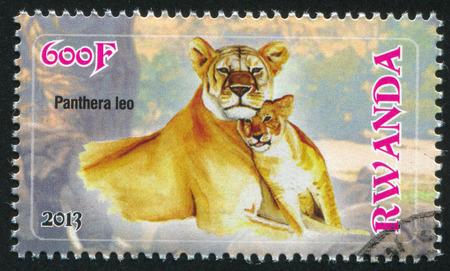 felid: RWANDA - CIRCA 2013: stamp printed by Rwanda, shows Lion, circa 2013