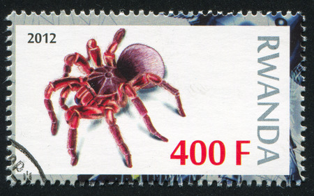 RWANDA - CIRCA 2012: stamp printed by Rwanda, shows Spider, circa 2012 Stock Photo - 24483678
